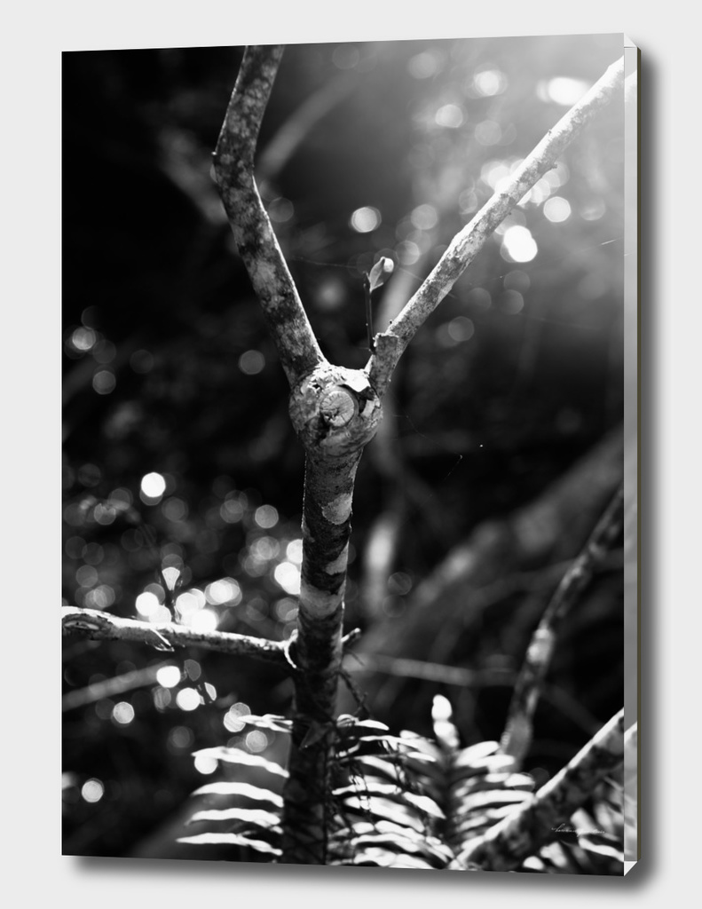 Black & White Tree Branch