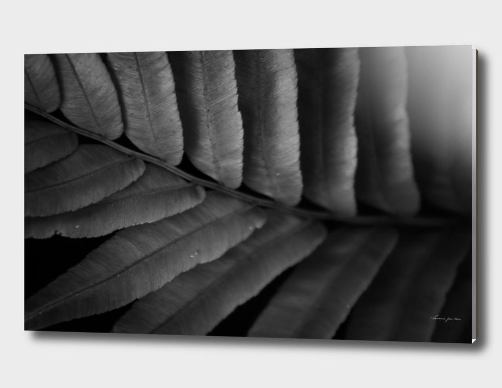Foliage in Black & White