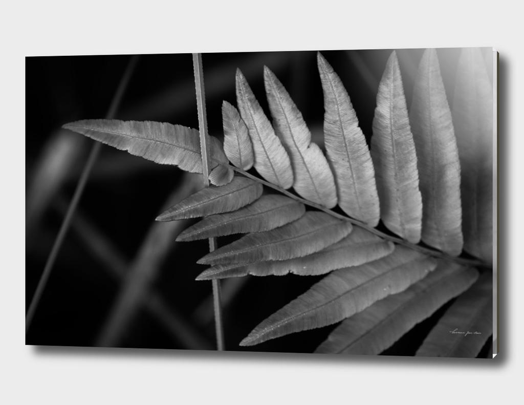 Foliage in Black & White (2)