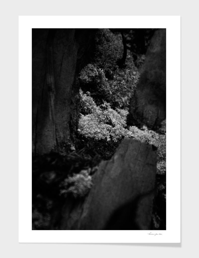 Mossy Trunk in Black & White