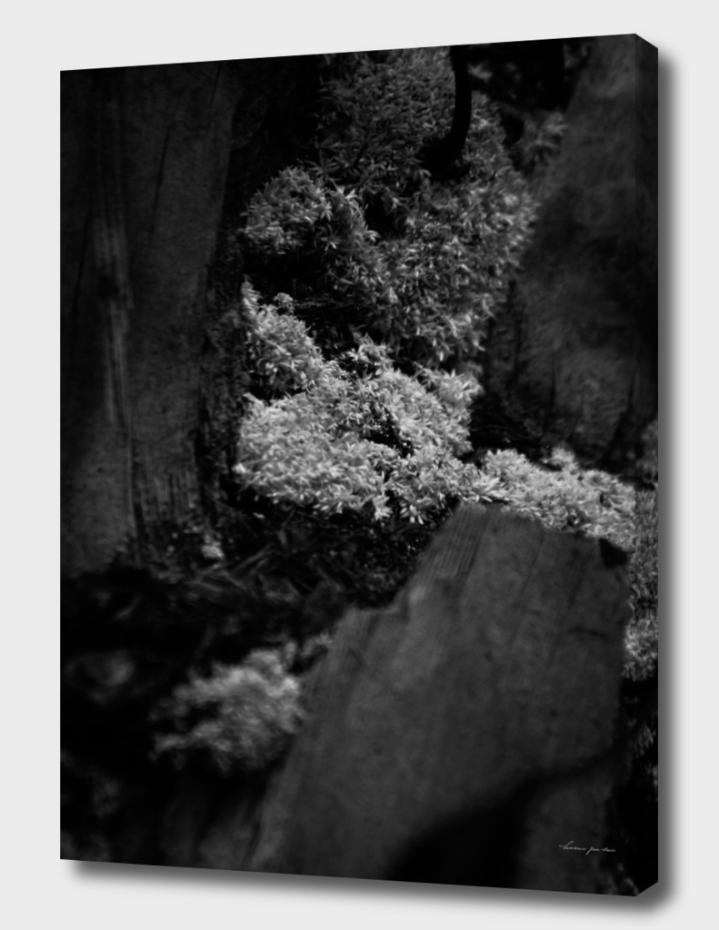 Mossy Trunk in Black & White