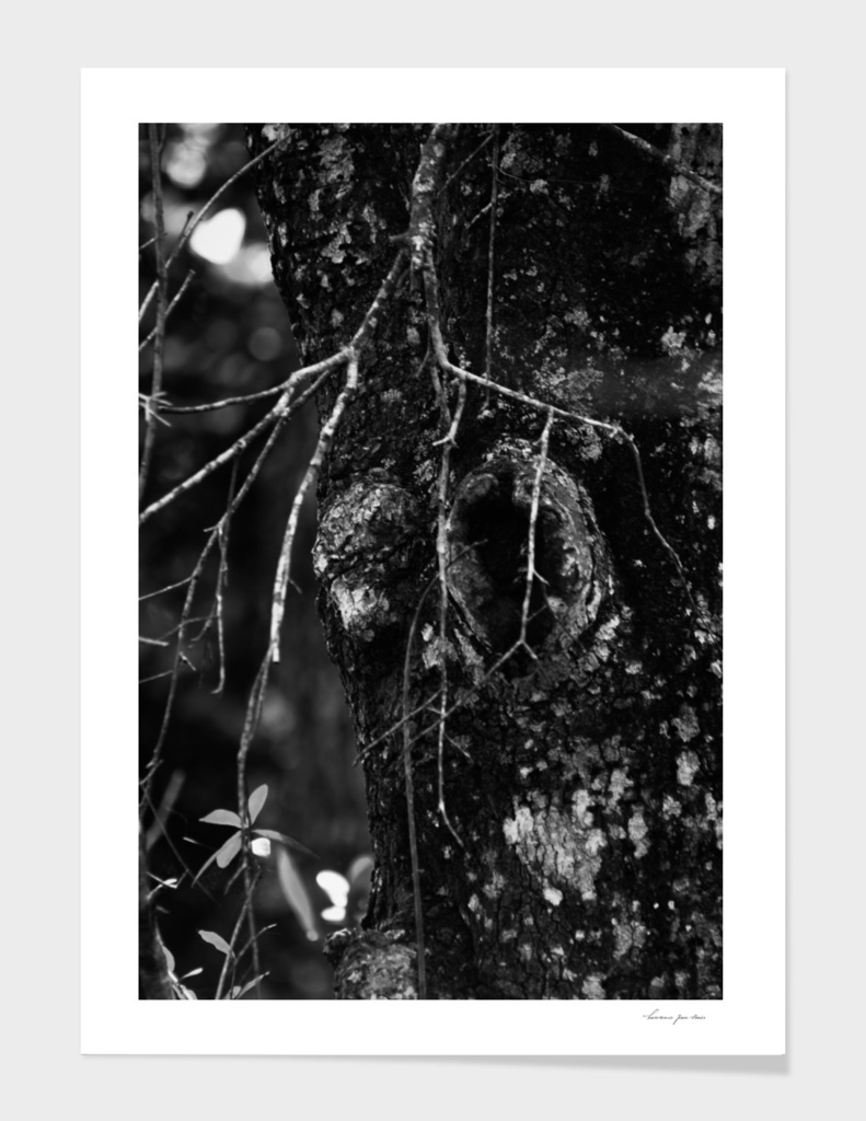 Tree Trunk in Black & White