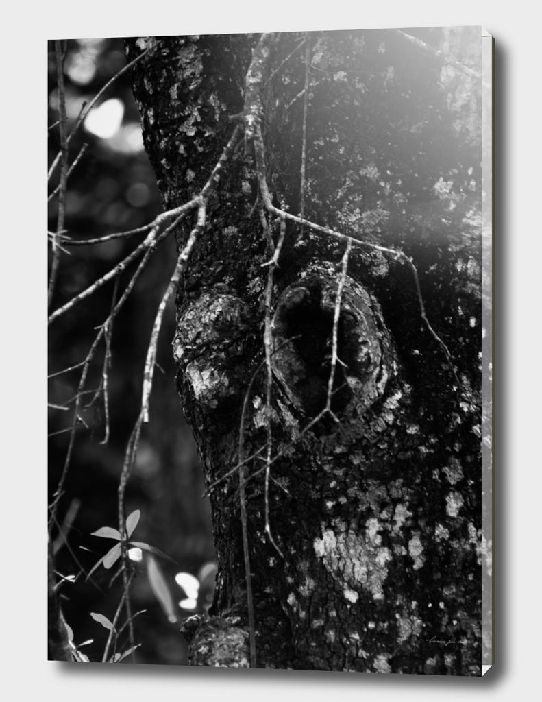 Tree Trunk in Black & White