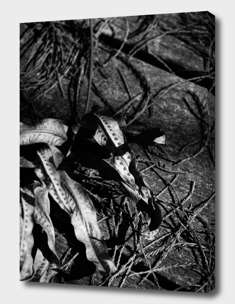 Fallen Leaves in Black & White