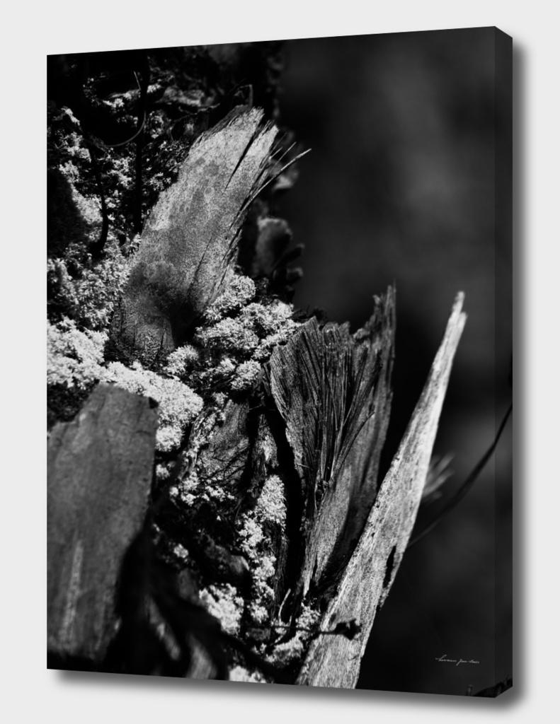 Mossy Tree Trunk in Black & White
