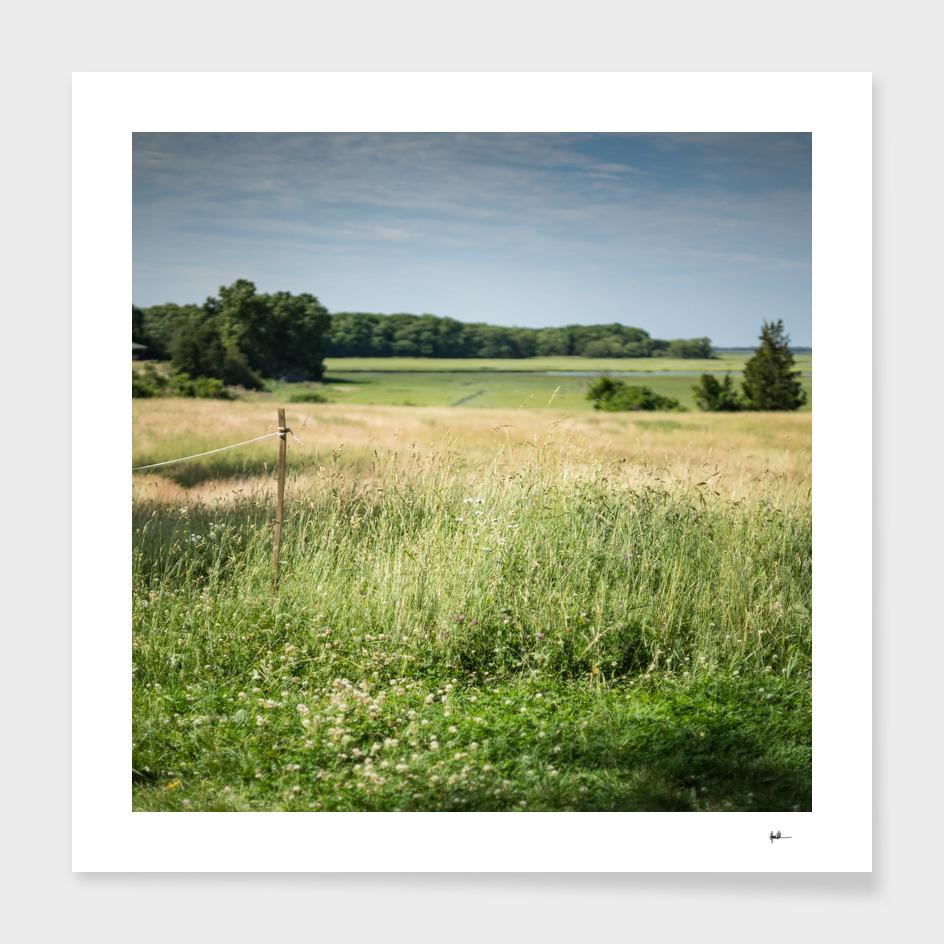 Ombre Marsh