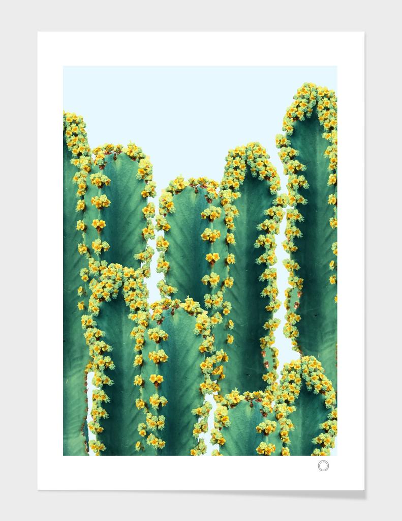 Adorned Cactus