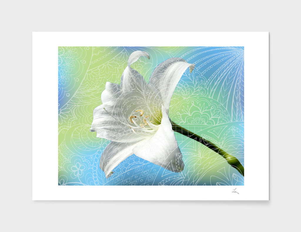 zen art and amaryllis