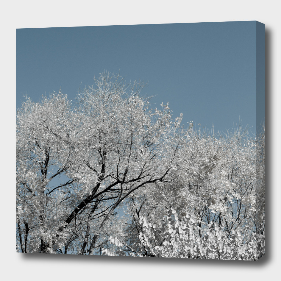 White landscape
