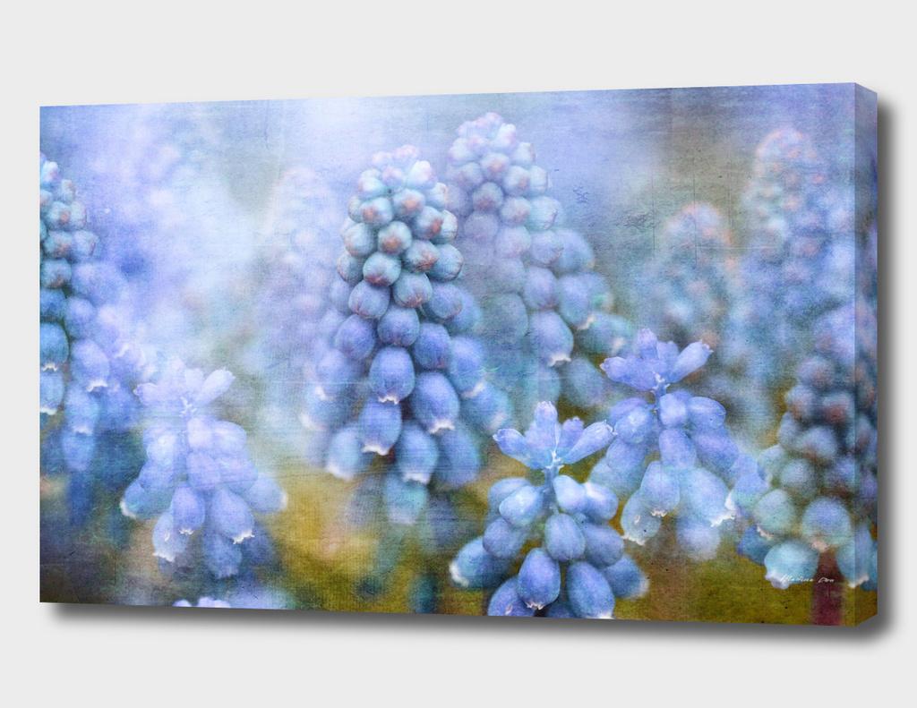 Vintage Spring Flowers - Muscari