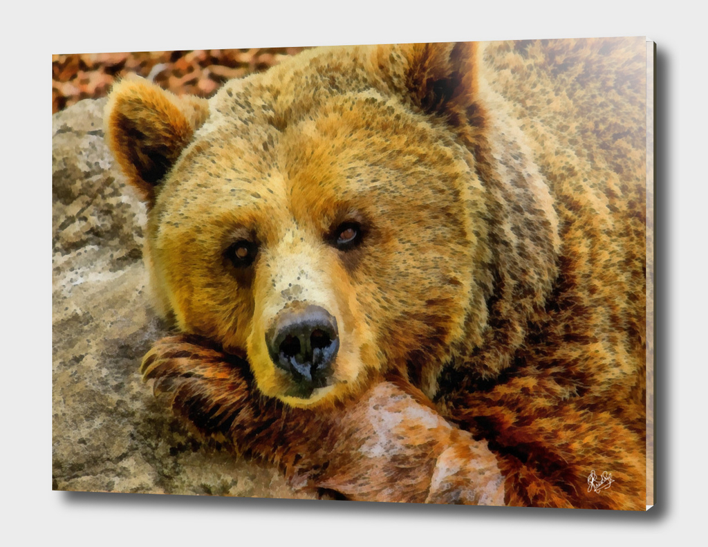 BEAR RESTING ON A ROCK