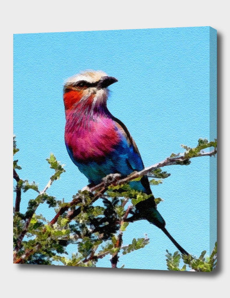 BIRD BEAUTY - LILAC BREASTED ROLLER