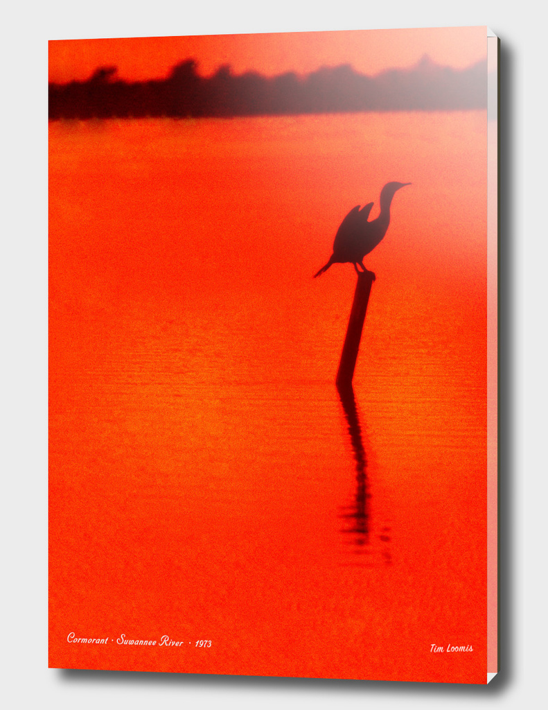 Cormorant Suwannee River