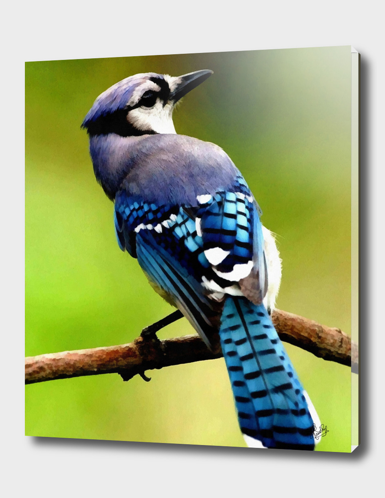 HYPER-REALISTICALIA C1N6 - BLUE JAY BIRD SITTING ON A BRANCH