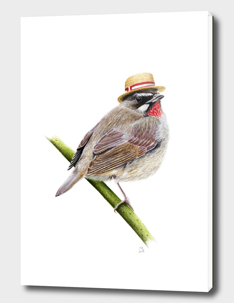 Mr. S. Rubythroat