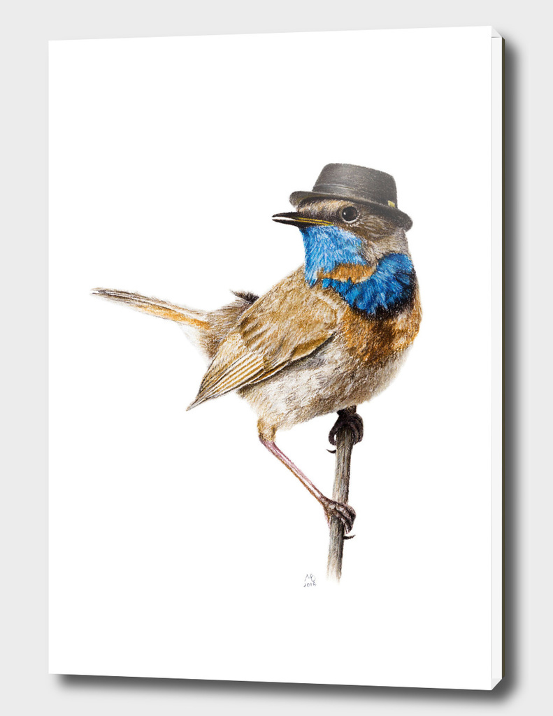 Mr. Bluethroat