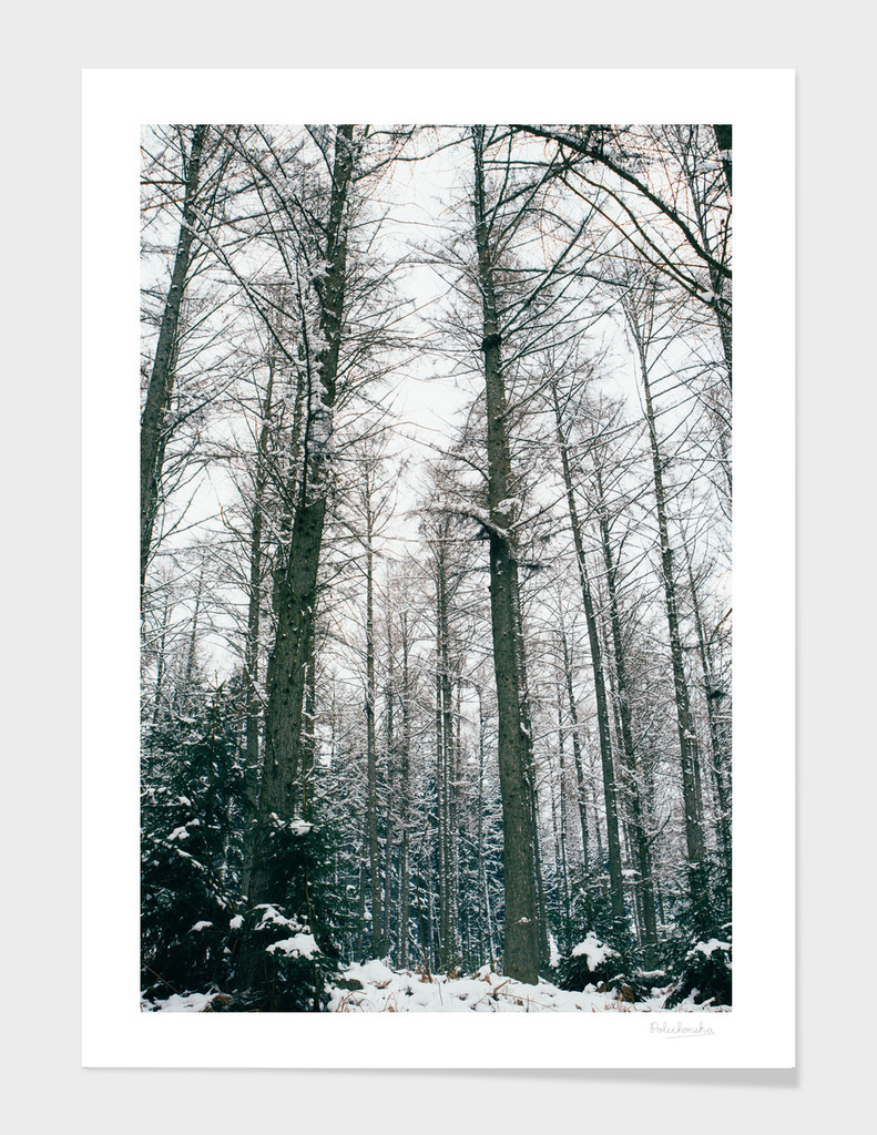 Winter Forest I