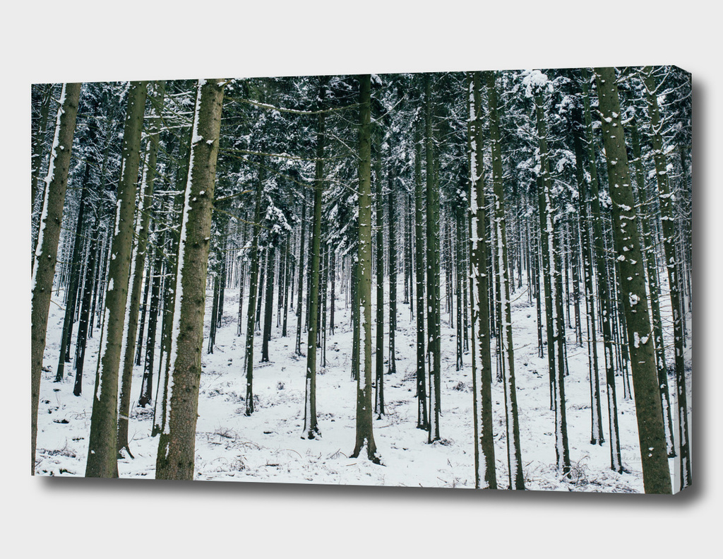 Winter Forest II
