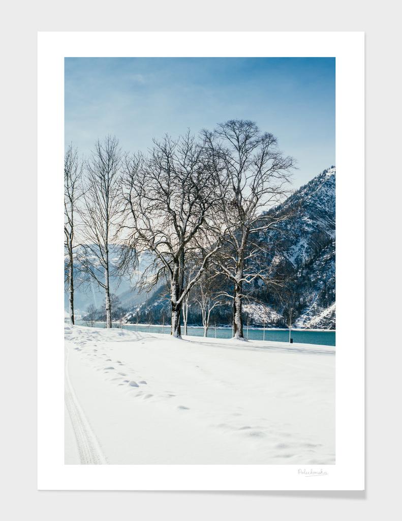 Trees In Austria