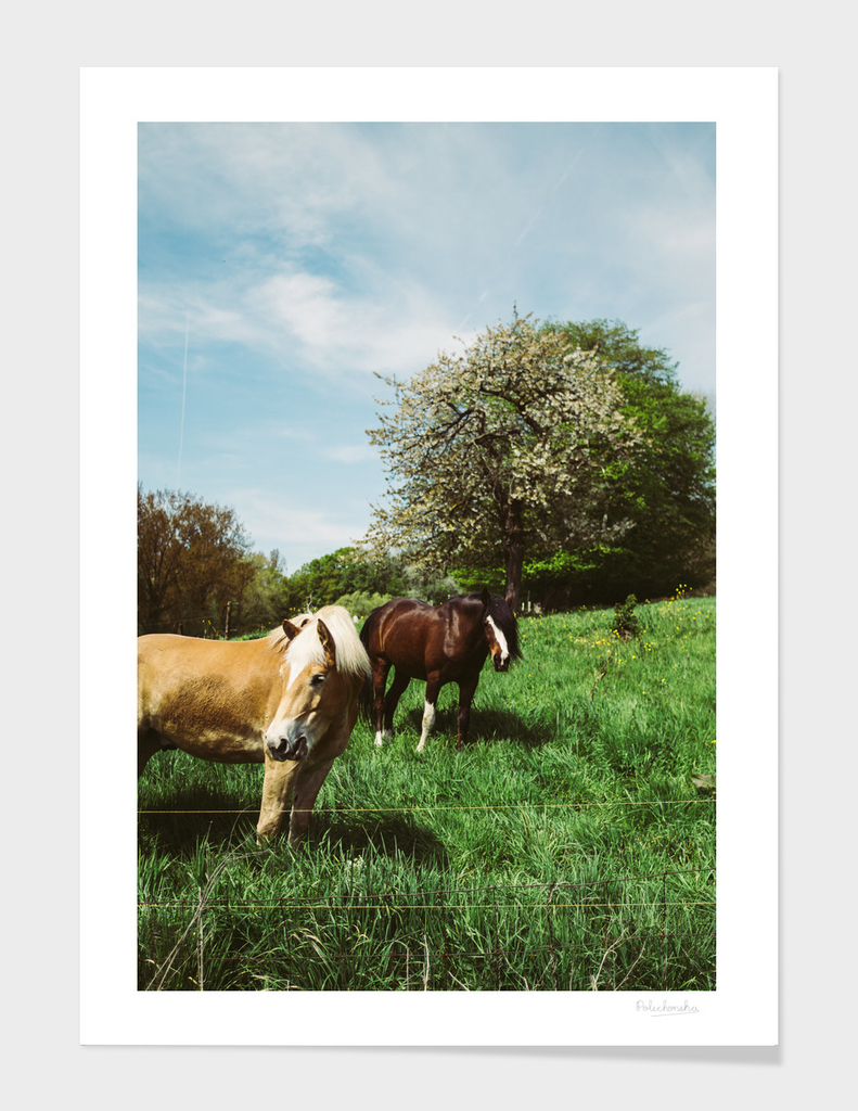 Ponies In The Pasture