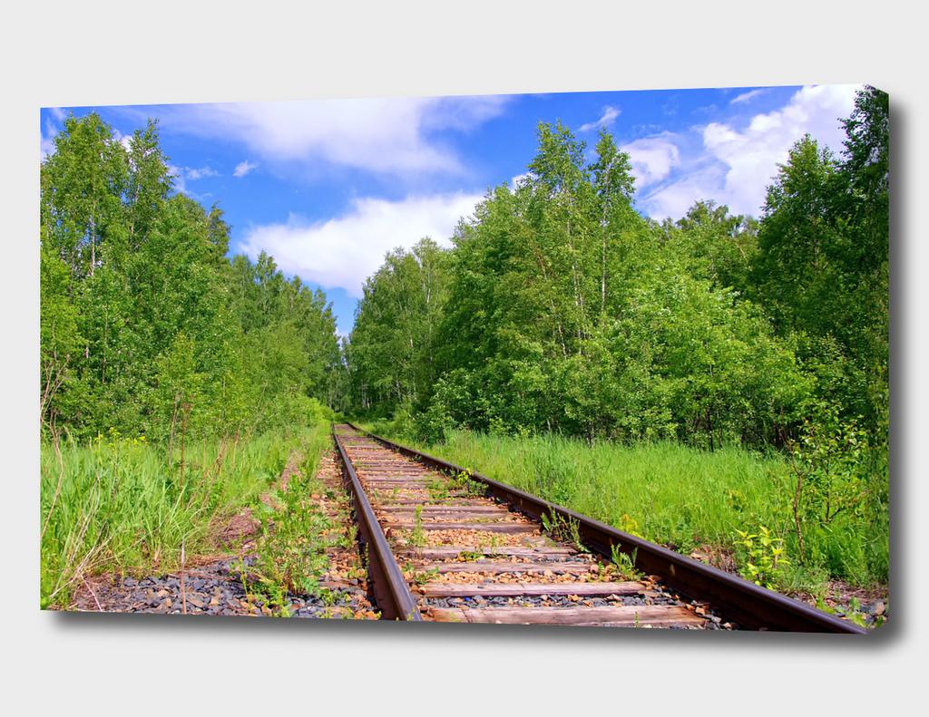 Summer. Forest. Railway