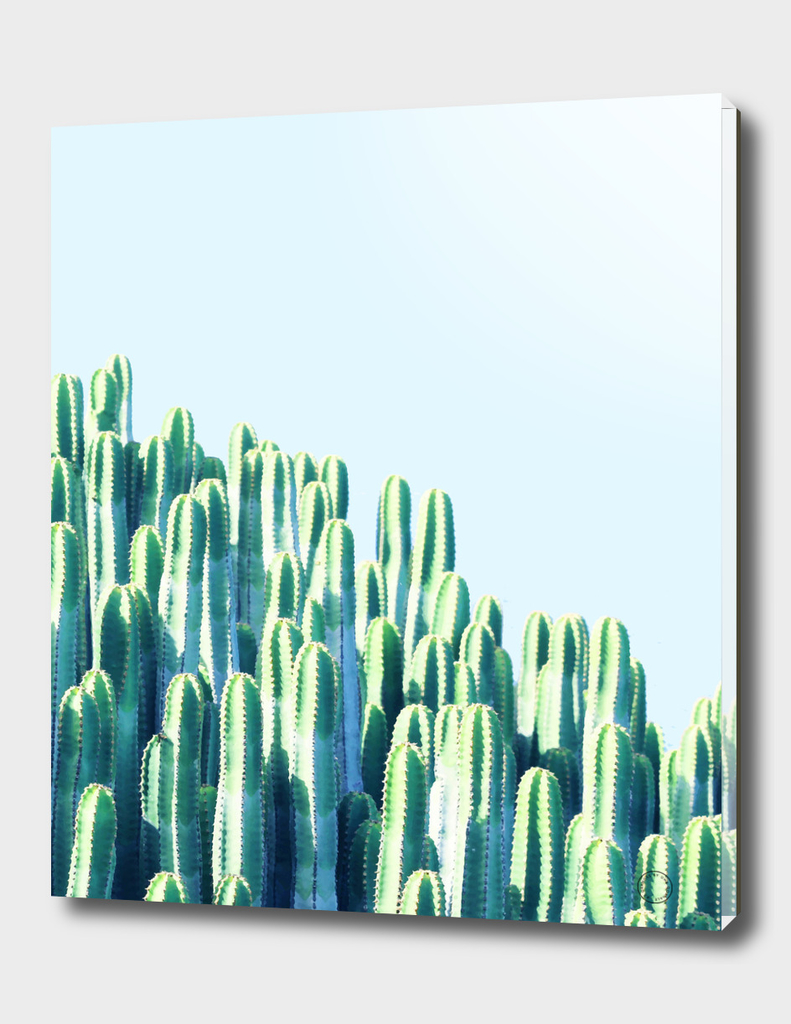 Cactus by the Sea