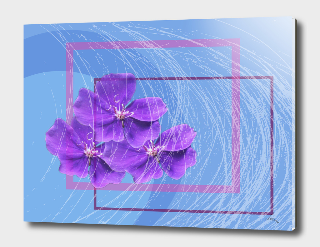violets on the blue