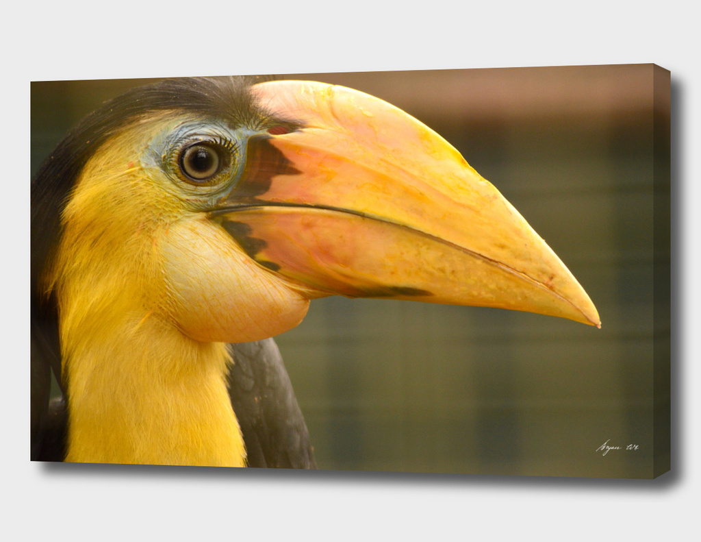Hornbill - Identify this please!