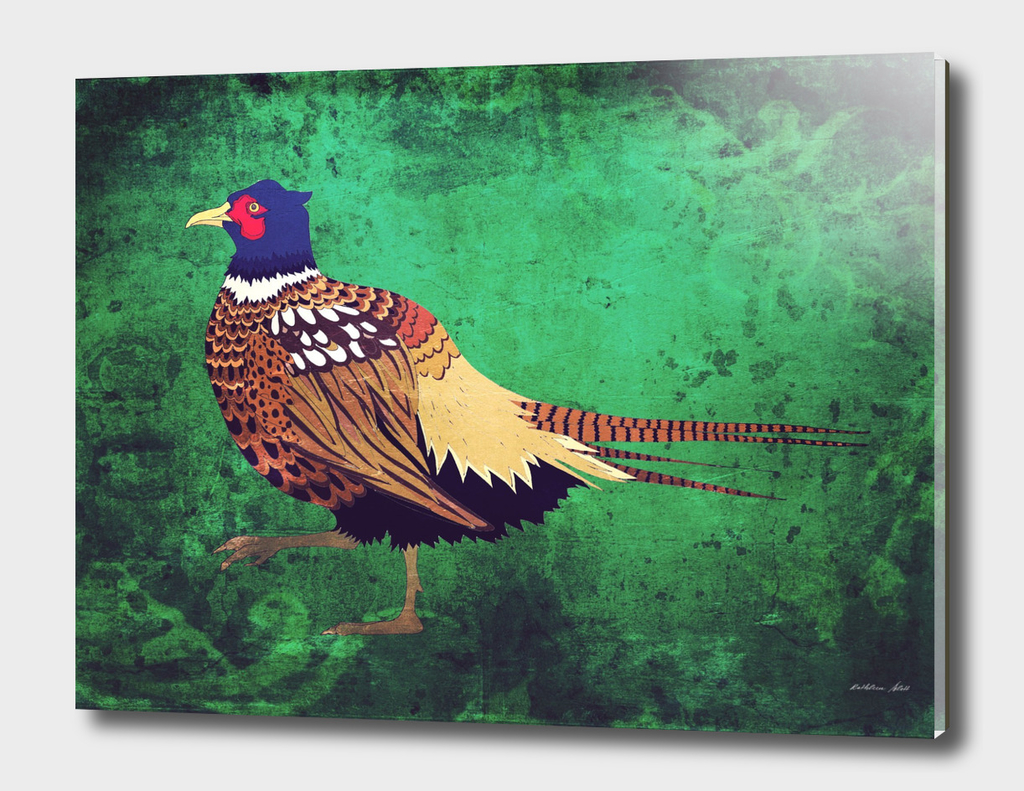 Fancy Pheasant