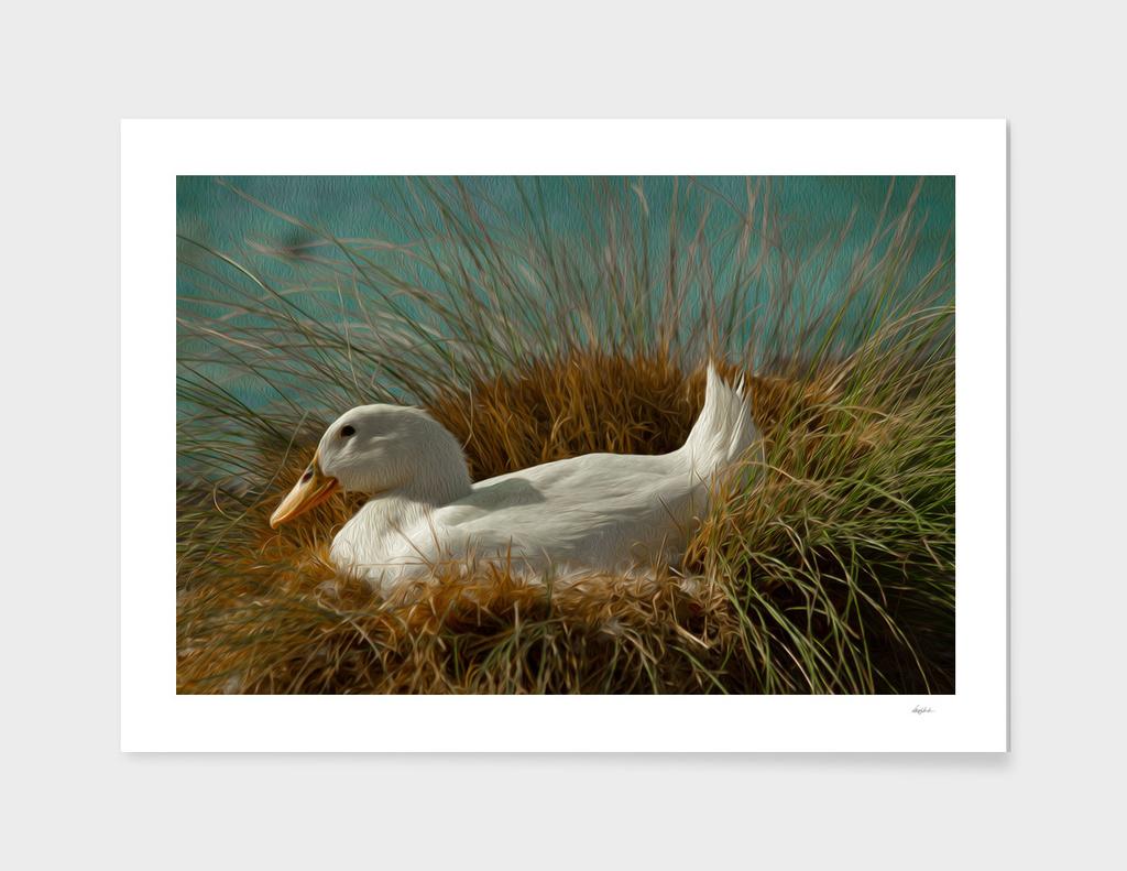 Nesting Ducky