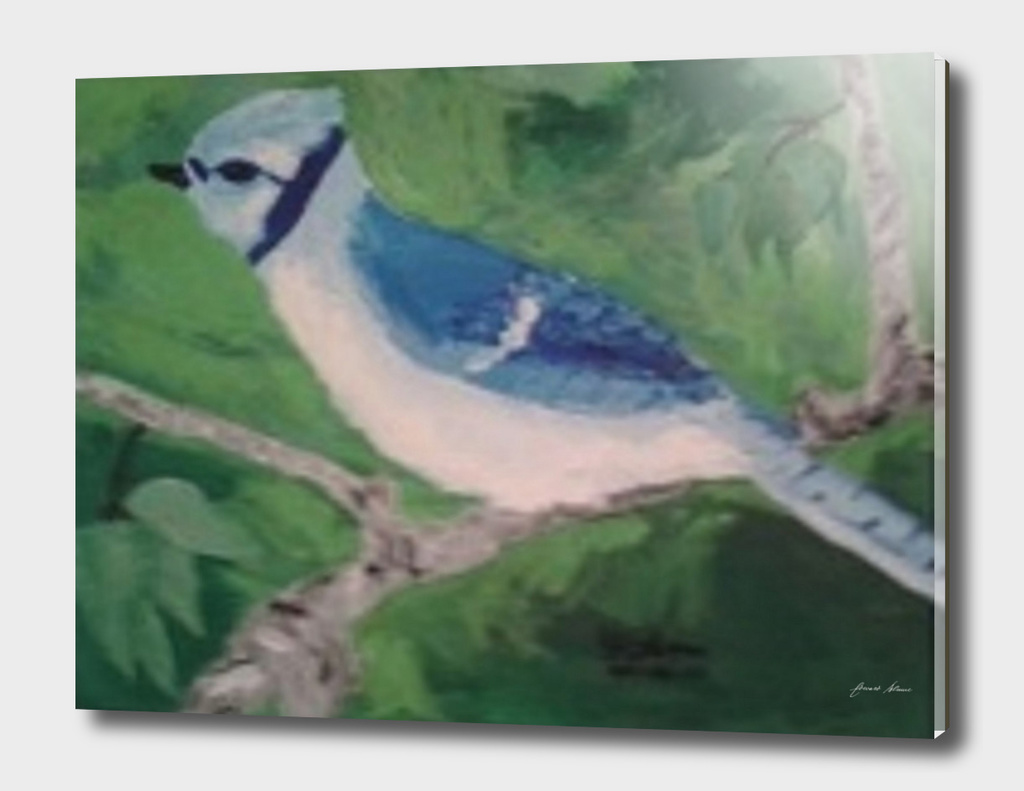Sitting Bluejay