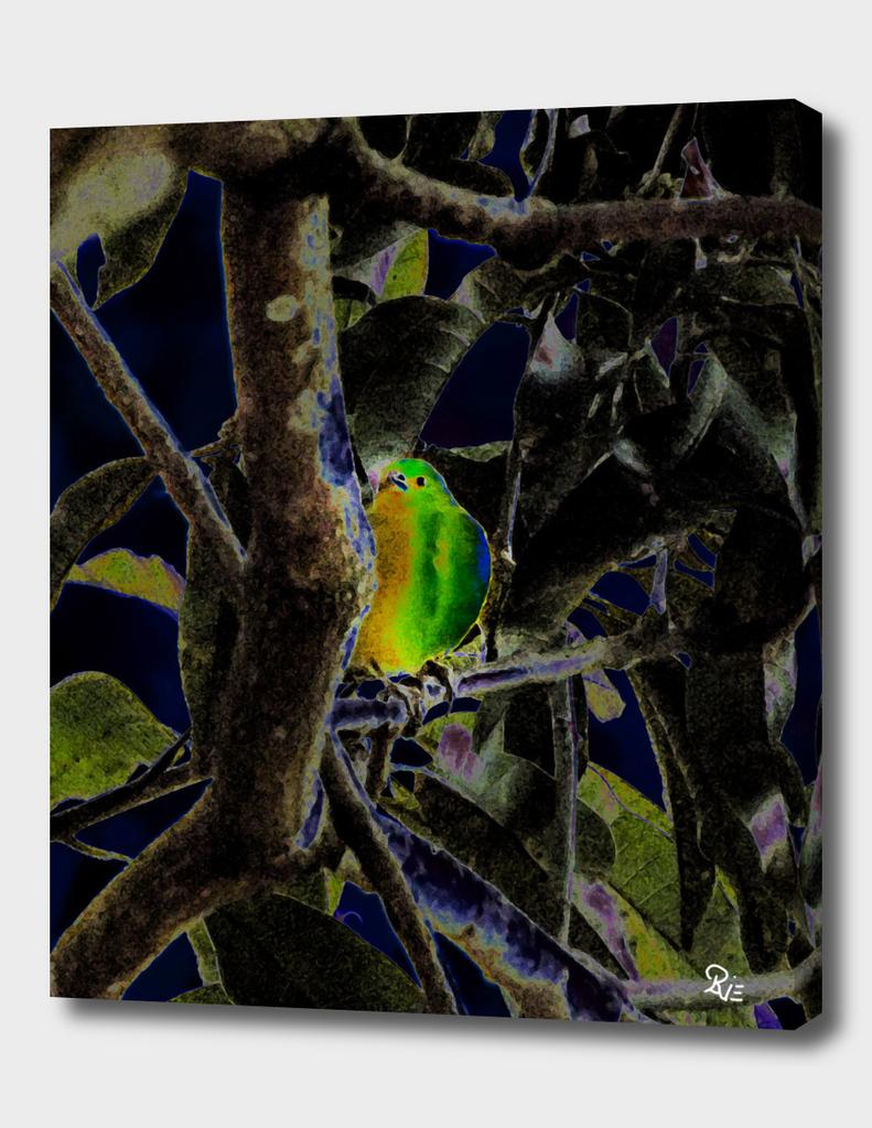 Camouflage Bird 2