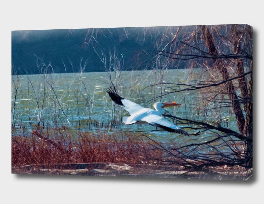 pelican5 copy