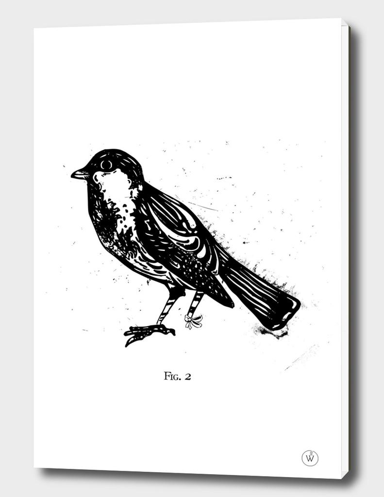 Fig.2 Broken Sparrow