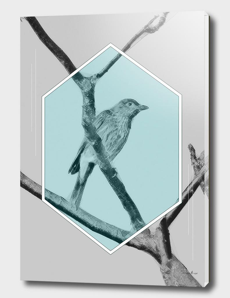 Juvenille Figbird