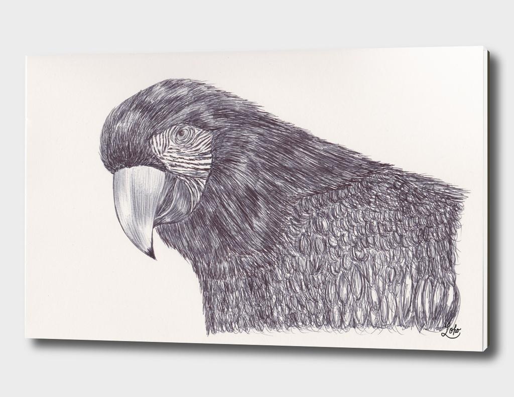 Ballpen Bird 5