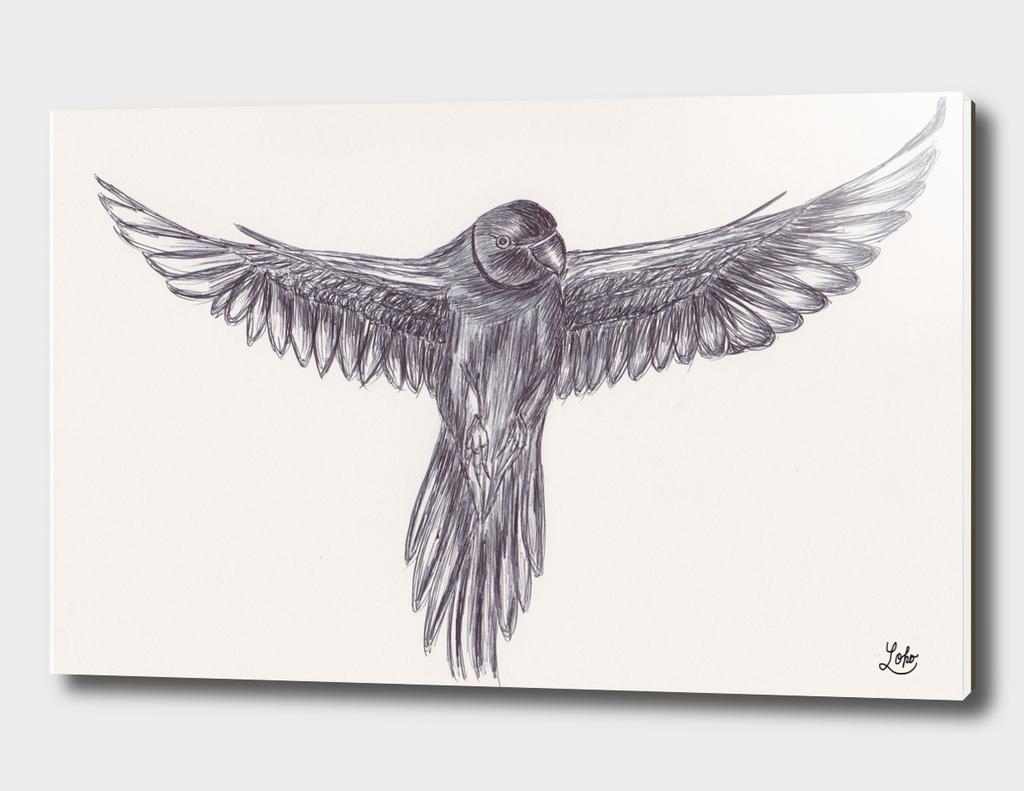 Ballpen Bird Drawing 10