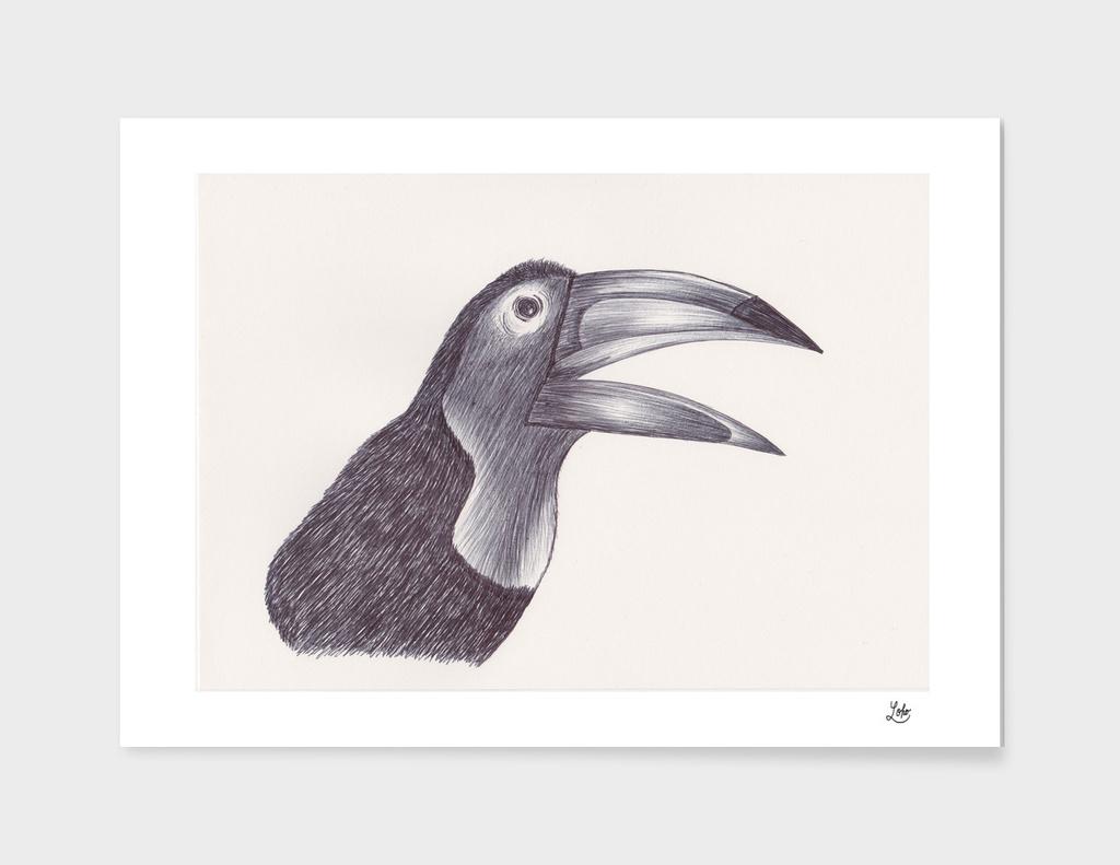 Ballpen Bird 8