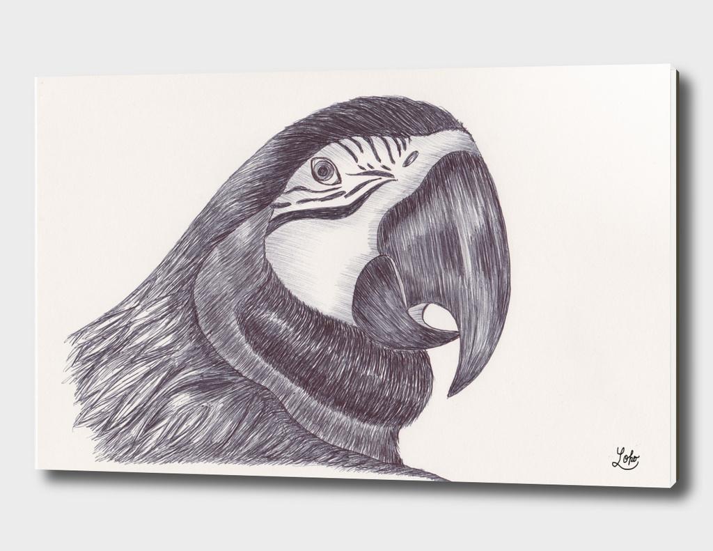 Ballpen Bird 9