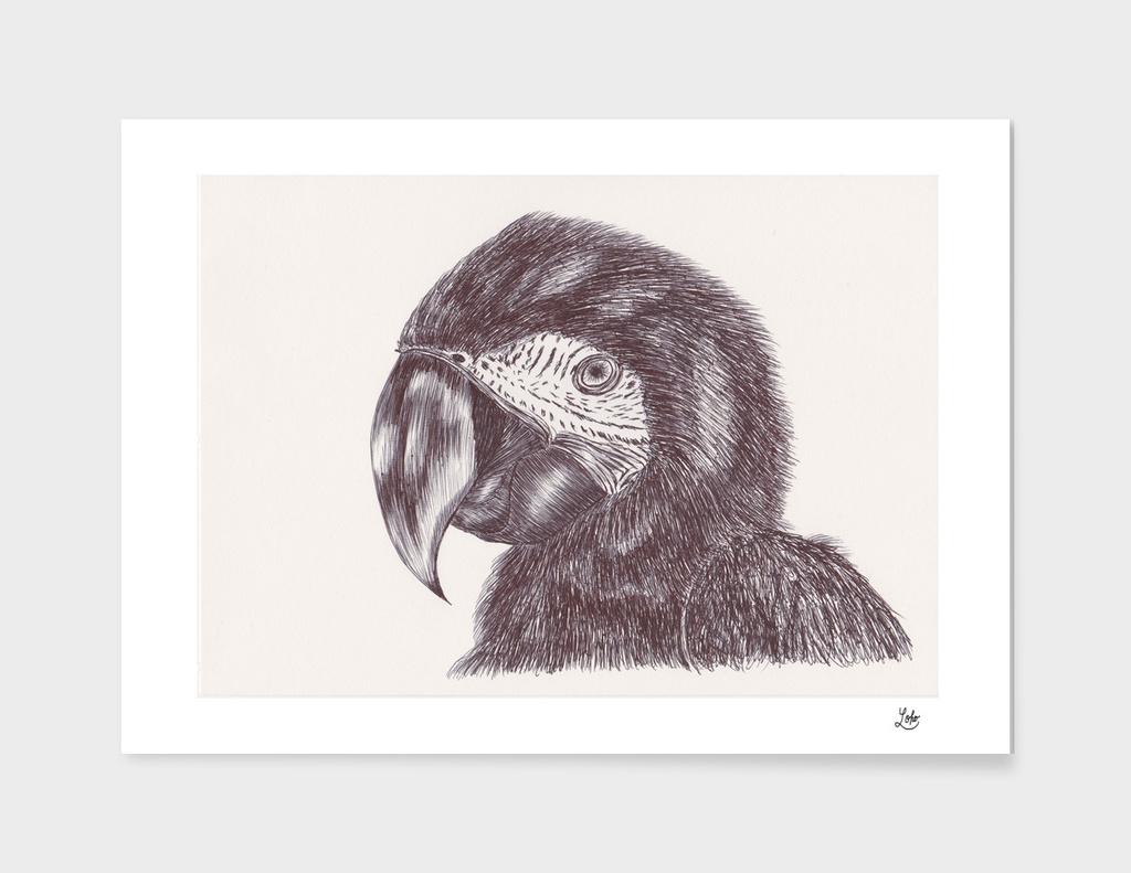 Ballpen Bird 1