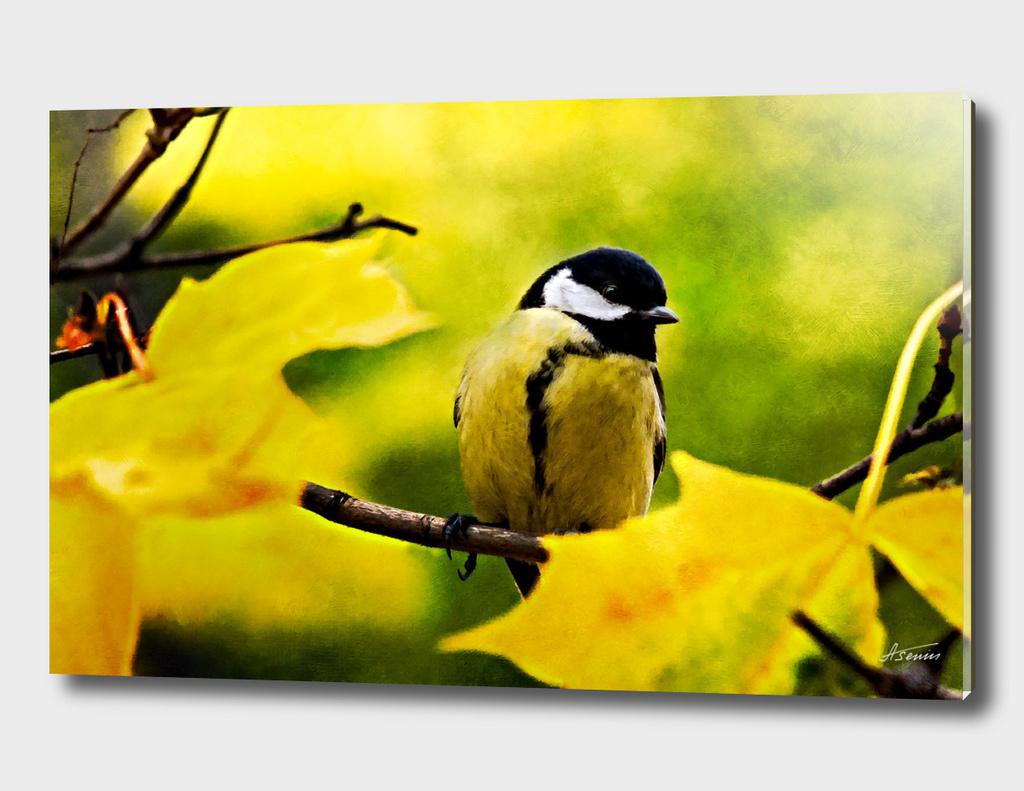 Tomtit Bird - Dressed To The Season