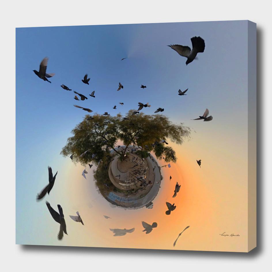 BIRDS FLY HIGH