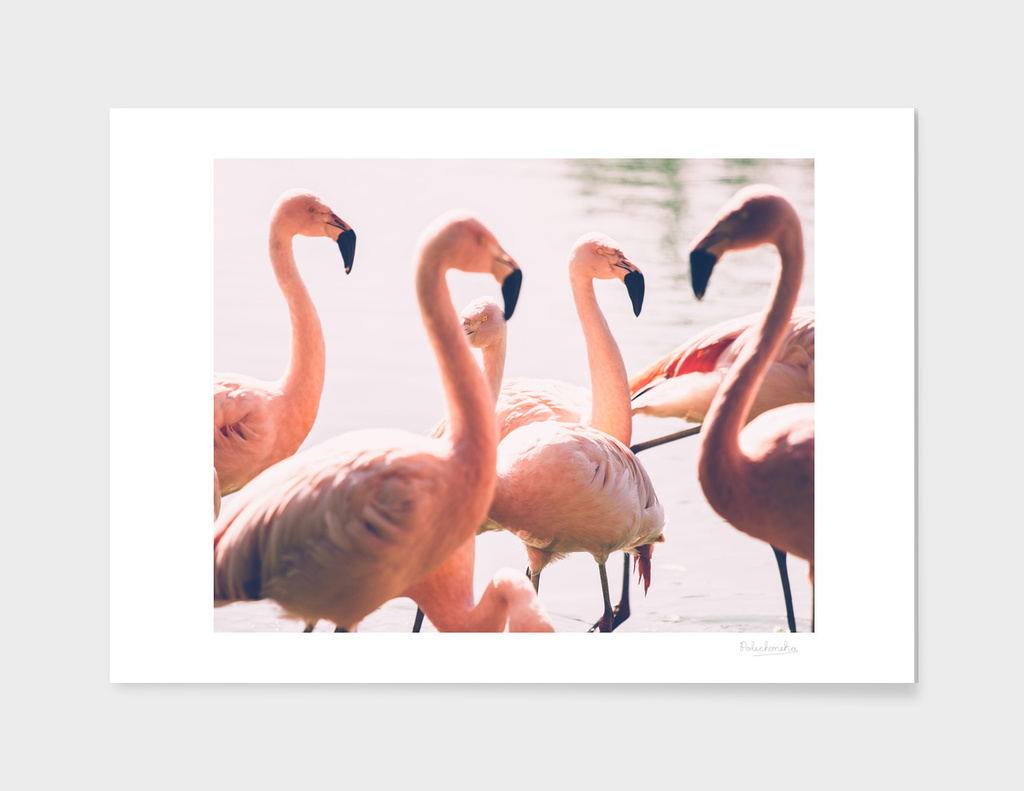 Pink Flamingo Flock