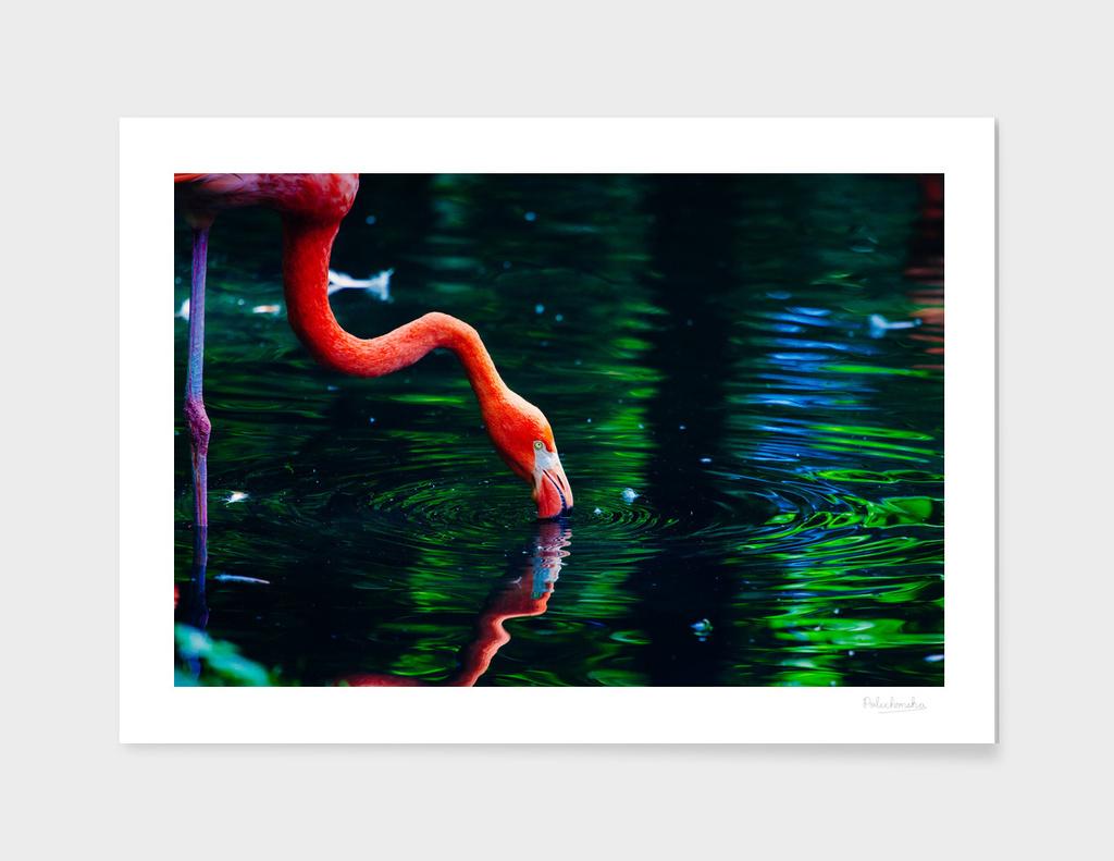 Flamingo By Lake