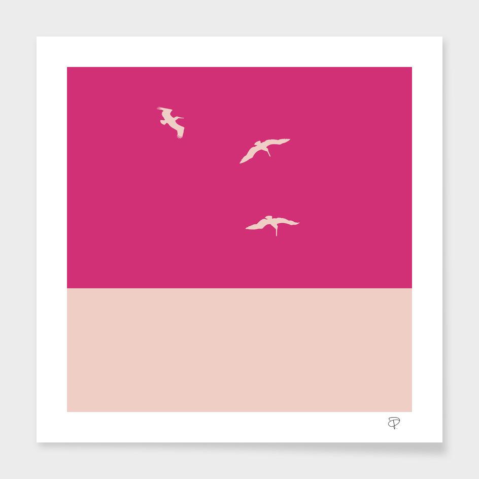Pink Pelican II