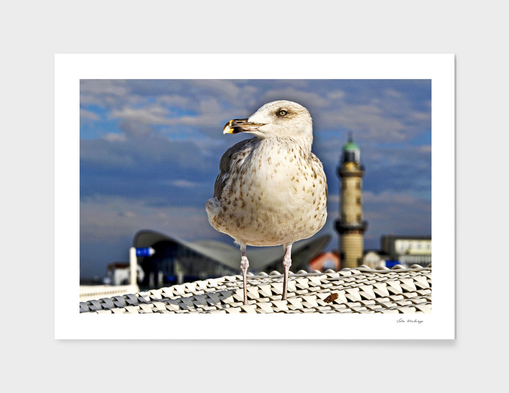 Magic Seagull on the Baltic Sea