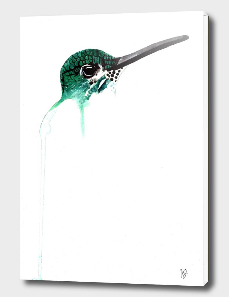 monteverde hummingbird