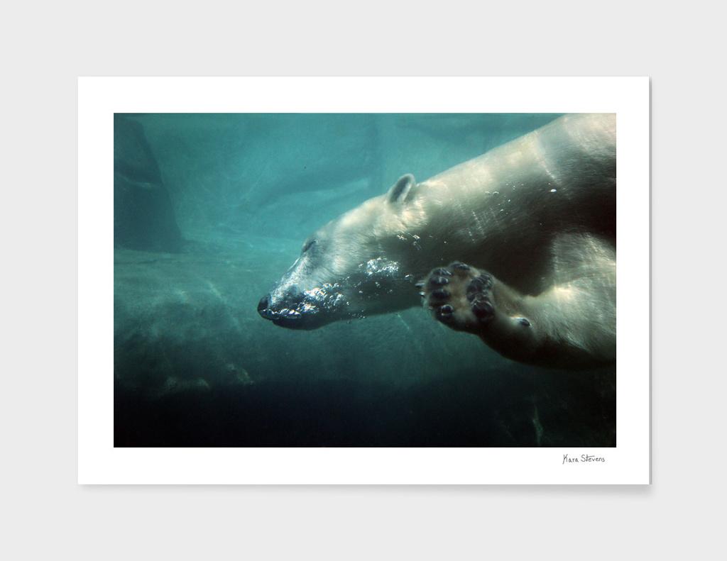 Polar Bear Waving