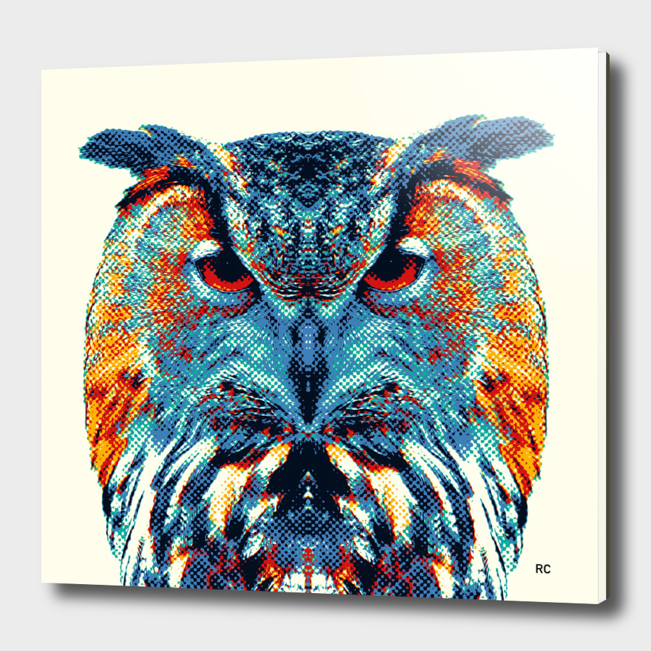 Owl - Colorful Animals