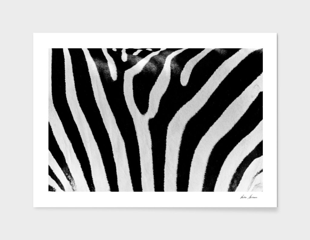 Black And White Zebra Skin